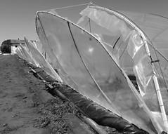 Respira (Aellevì) Tags: serra aria campagna plastica
