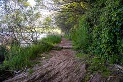 Ancient Woodland Trail (Rookie Phil) Tags: daytime outdoor spring wildlifehabitat nature ancientwoodland woodland lakeside lakesidetrail woodlandtrail flora trees naturetrail wildlife slaptonley countryside rustic fujifilmxt3 xt3 fujinonxf1655mmf28 xf1655f28 bucolic