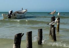 _MG_8661 (ferydvlz) Tags: outside nature mexico holbox quintana roo viaje ave beach