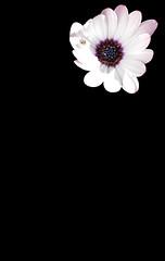 FLOR (Joan Biarnés) Tags: centenys pladelestany girona 314 panasonicfz1000 flor macro