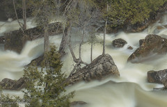 The Force Of Spring (maureen.elliott) Tags: water waterflow rapids rocks river brucetrail nature spring