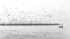 Sangam | Allahabad (ayashok photography) Tags: ayp9451 kumbhmela prayag kumbh mela ardhkumbhmela triveni sangam allahabad uttarpradesh chennaiweekendclickers cwc cwc701