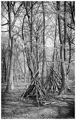 Camp (peterphotographic) Tags: img012sefexedwm camp leica leicam6 m6 summarit summaritm35mmf25 ©peterhall chaletwood wansteadpark wanstead eastlondon london england uk britain nik silverefexpro2 blackandwhite blackwhitephotos bw monochrome wood tree tent log branch bluebell bluebellwood teepee film 35mm prime scanned filmsnotdead analog kodak portra portra400