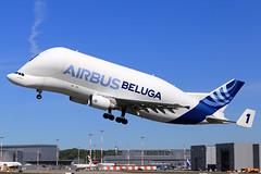 Airbus Transport International  Airbus A300F4-608ST Beluga F-GSTA (widebodies) Tags: hamburg finkenwerder xfw edhi widebody widebodies plane aircraft flughafen airport flugzeug flugzeugbilder airbus transport international a300f4608st beluga fgsta