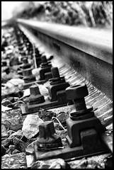 Ferrovia - Ex tratto della Milano-Genova a Chiaravalle Milanese (claudiobertolesi) Tags: ferrovia binario binari 2013 sony sonynex6 claudiobertolesi bulloni italia lombardia abbandono abbandonato ramisecchi bw blackandwhite railway abandoned milano chiaravallemilanese biancoenero