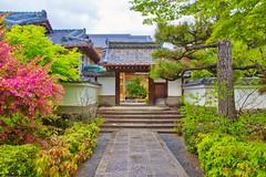 Spring in Kyoto (nigel@hornchurch) Tags: ukyokukyoto kyoto japan dsc0720