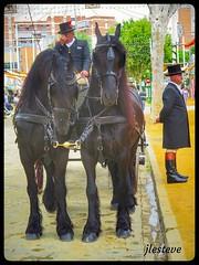 Jueves de Feria en Sevilla (José Luis Esteve) Tags: feria caballos carruajes fiestas sevilla andalucía sol primavera