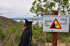 Golubac (dinapunk) Tags: serbia golubac dog pet animal rottweiler sign hill mountain river nature