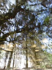 Wildermess (andressolo) Tags: reflection reflections reflejos river stream pond trees forest nature barra abstract abstracto water agua