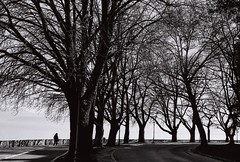The product of the first three factorials (Elios.k) Tags: horizontal outdoors people oneperson walk walking pedestrian distance silhouette trees planetree platanus bare branches lake lakepamvotis lakefront path water road street bend turn τοδώδεκα blackandwhite mono monochrome bw travel travelling february 2018 vacation canon camera photography ioannina epirus greece ιωάννινα ελλάδα ήπειροσ europe dark film analoguephotography scannedfilm analogfilm grain canona1 a1 analogcamera kodaktrix trix400