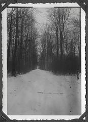 Album D134 Waldweg im Havelland, 1934 (Hans-Michael Tappen) Tags: archivhansmichaeltappen albumd 19201940er natur waldweg schnee winter snow vegetation weitblick nutzwald havelland landschaft landscape 1934 1930s 1930er fotorahmen outdoor