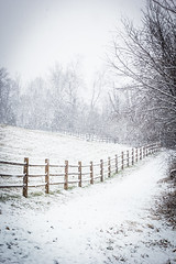 The Fence (gcarmilla) Tags: trees fence recinto alberi neve snow inverno winter