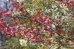 447 Paris en Mars 2019 - sur le Port de l'Arsenal (paspog) Tags: paris france mars march märz portdelarsenal blumen blossoms 2019 fleurs