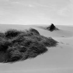 In the Dunes, Oregon Coast (austin granger) Tags: oregon coast dunegrass oregondunes sand wind film square gf670