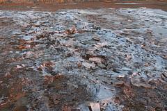 Gefrorene Pfütze (webernetz) Tags: matsch wasser eis gefroren stück