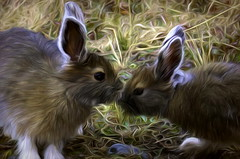Good Morning Sweetheart . . (JLS Photography - Alaska) Tags: art artwork artistic digitalart digitalmanipulation bunny bunnys jlsphotographyalaska painting painterly snowshoehare animal animals wildlife