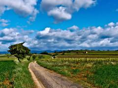 Balade dans les vignes (doumé piazzolli) Tags: dmcfz200 fz200 france paysage landscape languedocroussillon hérault occitanie vignes chemin arbre végétation espondeilhan puissalicon nuages clouds sky mazet trees ceps campagne relief vine
