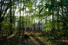 Luxuriance (pascal445) Tags: trees tree wood forest arbres arbre nature natural outdoor forêt forestier forêts light sunbeam sunset green leaves feuilles shadows lumiere