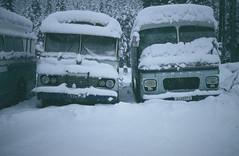 Linienbusse im Schnee Hovet bei Geilo, N, Jan. 1985