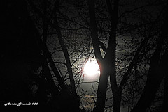 The Moon one Night in April - N1 (mariagrandi985) Tags: moon themoon moonlight trees treebranches treetrunks silhouettes backlight contraluz contrast highcontrast contraste composition perfectcomposition learningcomposition beautifulcomposition lightanddakrness white black night uploadedonmay102019 nature natureinthecity naturewatcher urbannature sky nightsky