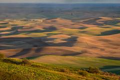 Ever-changing land and skies 11 (Richard McGuire) Tags: palouse steptoebutte us washington landscape skies sunset