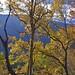 20190506-DAO_0207 秋天楓樹葉子的色彩