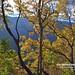 20190506-DAO_0204 秋天楓樹葉子的色彩