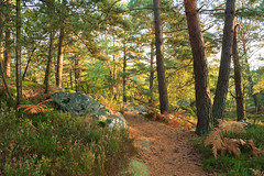 IMG_6710 (Andrew Cherkasov) Tags: fontainebleau forest france canon40d landscape autumn stone heather sunny pine forestimages fir:forest=fontainebleau
