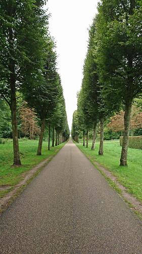 Tree-lined avenue, Fredensborg Castle