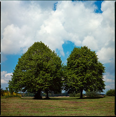 Hasselblad 503cx Ektar (martin wilmsen) Tags: kodak kodakektar ektar100 nature trees film filmphotography hasselblad hasselblad503cx 80mm planar analog mediumformat 6x6 twiske natuurgebied oostzaan netherlands holland