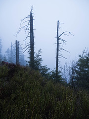 _1050036.jpg (tuehna) Tags: mummelsee hornisgrinde schwarzwald blackforest