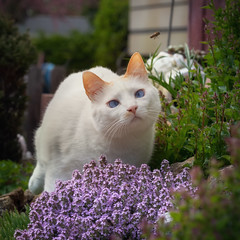 Hey, where are you going ? (FocusPocus Photography) Tags: filou katze kater cat biene bee blumen flowers pflanze plant insekt insect garten garden tier animal haustier pet