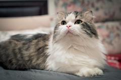 DSC_0025 (漫步攝影(Jershliou)) Tags: catlife cat catfamily cats cutecat lazycat animal cute 貓
