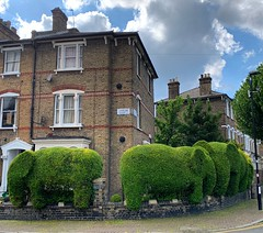 Elephant Hedge (Herschell Hershey) Tags: trim bush hedge topiary finsburypark london elephanthedge