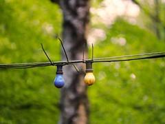 Blau und Gelb ergibt Grün ;-) |  11. Mai 2019 | Schleswig-Holstein - Deutschland (torstenbehrens) Tags: olympus penf 7xef50149mm f28 blau und gelb ergibt grün | 11 mai 2019 schleswigholstein deutschland