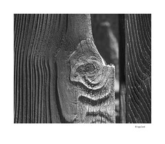 Rippled (agianelo) Tags: weathered wood grain texture monochrome bw bn blackandwhite fence