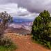 Grand Canyon - Navajo Point