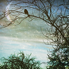 if the moon smiled (1crzqbn) Tags: sliderssunday bird snow tree textures