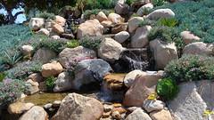 190504 244 Fallbrook Garden Tour - House 5 on Calle Linda, Senecio mandraliscae,  Oscularia deltoides 'Compact Form', Aeonium canariense