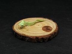 Snake (C. Boudias) (Helyades) Tags: origami pli pliage fold carré square papier paper miniature animal snake serpent boudias bicolor