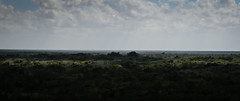 Panoramic view of the Yucatán Jungle Landscape from top of Nohoch Mul Pyramid - Cobá Maya Ruins - Coba Mexico (mbell1975) Tags: tulum quintanaroo mexico panoramic view yucatán jungle landscape from top nohoch mul pyramid cobá maya ruins coba peninsula yucatan mayan archeological park parc forest woods tree trees treetop pano panorama vista paysage