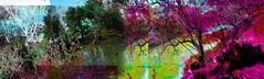 El río (seguicollar) Tags: art arte artedigital texturas virginiaseguí imagencreativa photomanipulation árboles río hojas agua panosabotaje panovisión colorido color red green ramas troncos water