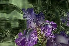 Iris (seguicollar) Tags: art arte artedigital texturas virginiaseguí imagencreativa photomanipulation lirio iris purple flower flor green ddg