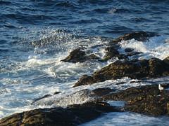 P1100104 (jesust793) Tags: mar sea rocas olas waves water