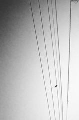 RICOH GRⅡ (leicafanboy..) Tags: ricoh grⅱ japan japanese モノクローム monochrome sky bw