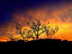 New York Sunset (dimaruss34) Tags: newyork brooklyn dmitriyfomenko image sky clouds skyline trees sunset