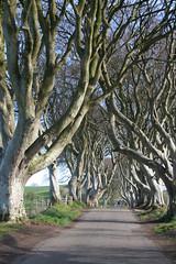 IMG_3575 (SomeThingsIKnow) Tags: darkhedges beech trees