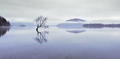 Resting Place (rubberducky_me) Tags: newzealand southisland tree water lake blue cloud morning reflection linhoftechnorama linhof film panorama 21