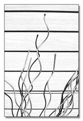 lignes high key (benoit_bouhier) Tags: noir et blanc high key