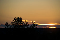 Uppsala, Sweden (14-1-2019) (TijmOnTour) Tags: uppsala winter sunset dusk silhouet cold snow scandinavia uppland sweden nordic beauty landscape outdoors hiking walking trees view clouds sky treeline horizon colorful purple yellow orange blue bluehour goldenhour